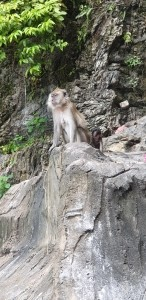 Monos desde escalera Batu Caves