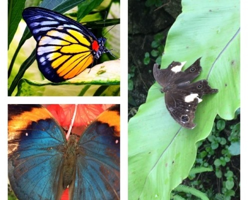 Parque de Mariposas de kuala Lumpur (Butterfly Park)